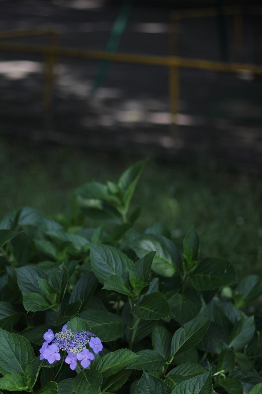 Canon EOS Kiss X2 + Canon EF50mm F1.4 USM