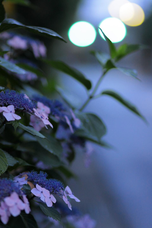 Canon EOS Kiss X2 + Canon EF100mm F2 USM