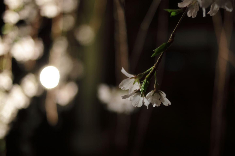 Canon EOS 6D + Canon EF35mm F2